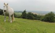 Vivianne grazing at The Ings top field