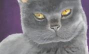 Our amazing portrait of Feli